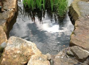 Water Features Ultimate Garden image 11